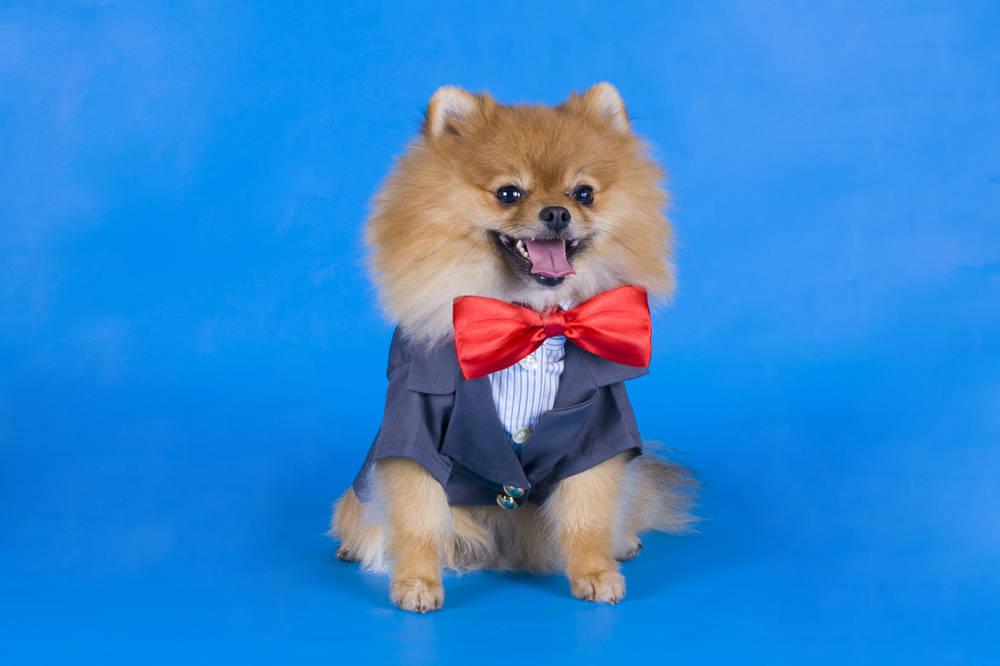 Moda y accesorios para perros