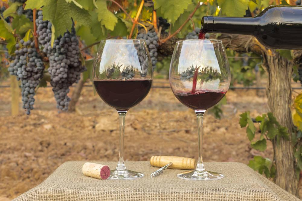 Apuesta por los vinos de Alicante