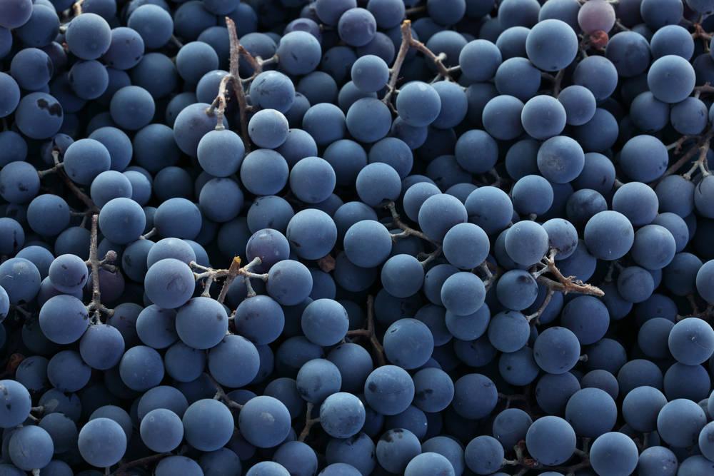 El vino es fundamental para nuestro país